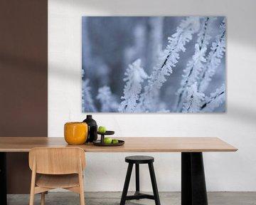sneeuwvlok, detail van een winterfoto van Karijn   Fine art Natuur en Reis Fotografie