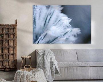 sneeuwvlokje, winterfoto van Karijn   Fine art Natuur en Reis Fotografie