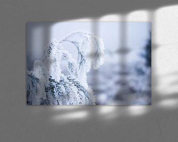 winter in het bos, plant bedekt in sneeuwvlokjes van Karijn | Fine art Natuur en Reis Fotografie