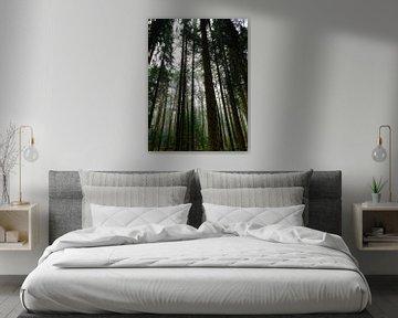 Herfstige naaldbomen van Susanne Pieren-Canisius