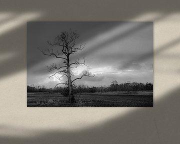 farbloser Baum im Winter von Roland's Foto's