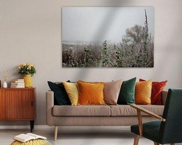 Bevroren planten in een ijzelbui van Bastiaan Buurman