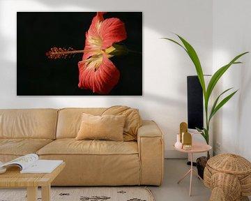 Hibiscus von Stefan Speelberg