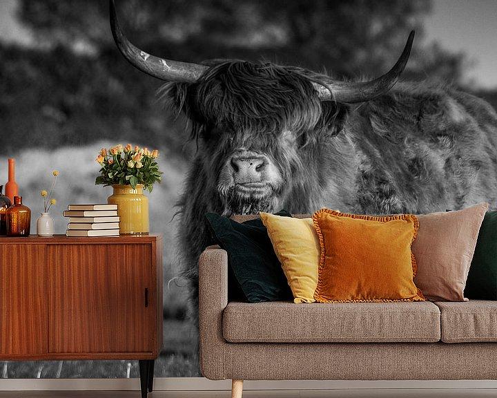 Sfeerimpressie behang: Schotse hooglander Rund van Kuifje-fotografie