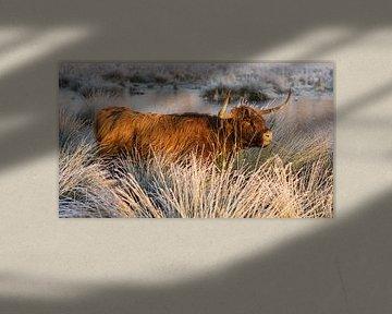 Schotse Hooglander Bevroren Wit Landschap van Charlene van Koesveld