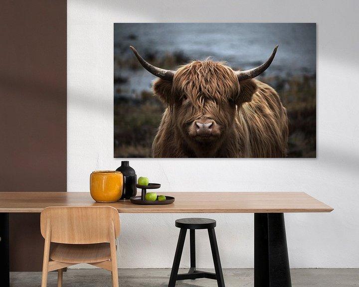 Sfeerimpressie: Schotse hooglander portret van bart dirksen