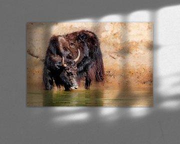 Ein Yak im Wasser (Kunst) von Art by Jeronimo