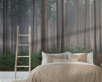 Kiefernwald in märchenhafter Atmosphäre von Toon van den Einde