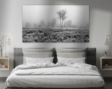 De Meinweg - Nebeliger Morgen in Schwarz und Weiß
