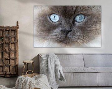 Nahaufnahme einer Rack-Puppe Katze von Sebastiaan Terlouw