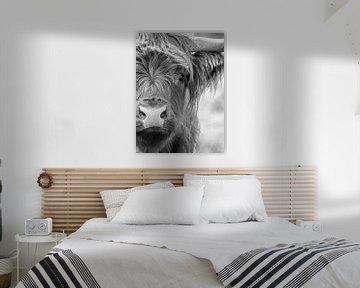Schotse Hooglander Portret Zwart-wit van Diana van Tankeren