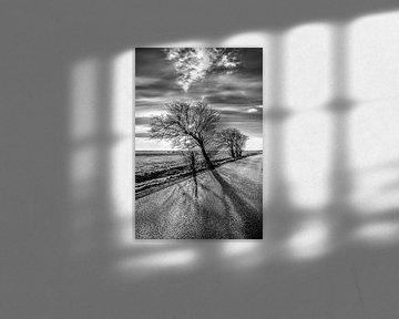Boom langs een Friese landweg in het tegenlicht van de zon van Harrie Muis