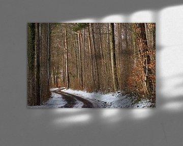 Chemin dans la forêt d'hiver sur CSB-PHOTOGRAPHY