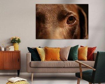 Eine Makro-/Nahaufnahme von meinem Hund Lilly von Julius Koster