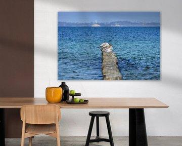 Zeemeeuwen op Buhen, Glowe op Rügen van GH Foto & Artdesign