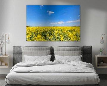 Champ de viol près de Glutzow, Poseritz sur GH Foto & Artdesign