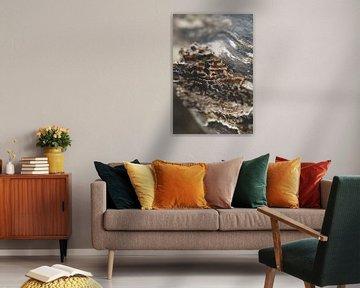 Paddenstoelen op een boomstam in het bos, Winter fotografie, bruin, schimmel, paddenstoel, boomschor van Frank van Hulst