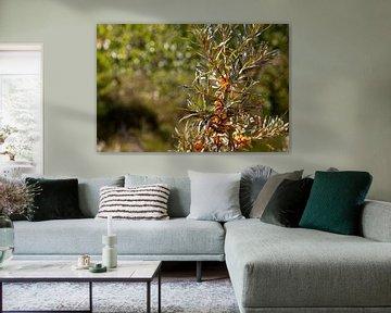 Oranje duinbesjes in natuurgebied van Percy's fotografie
