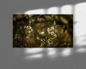 Takken met kleine bloemetjes eraan 2 van Percy's fotografie