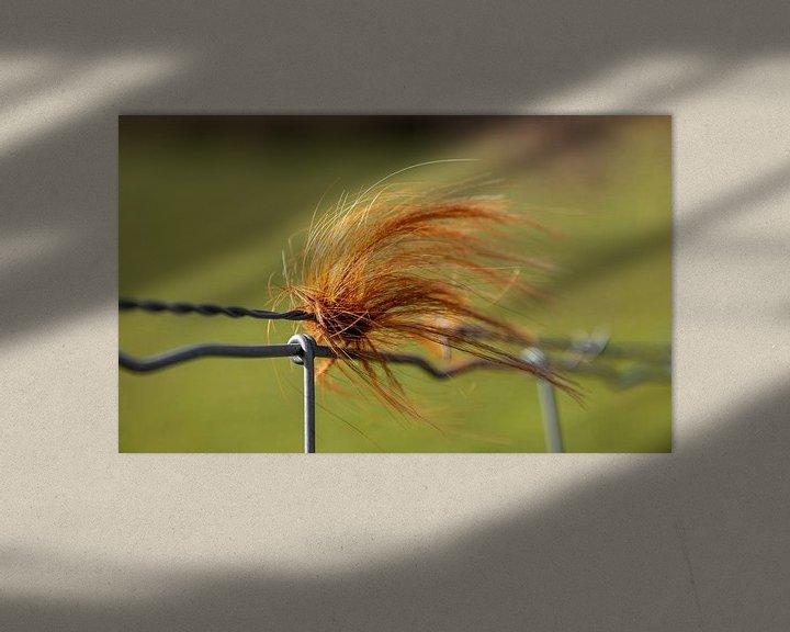 Sfeerimpressie: Bosje haar van stieren aan een hek van Percy's fotografie