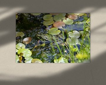 Camouflage Frosch von TOUCH Fotografie