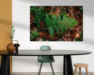 Varenblad in donker bos, omringd door bruin eikenblad