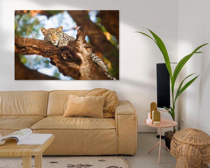 Sfeerimpressie: Luipaard in boom van Nicole Jagerman
