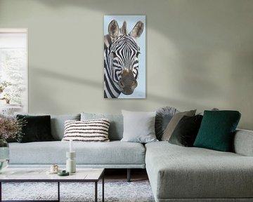 Zebra portret schilderij van Russell Hinckley