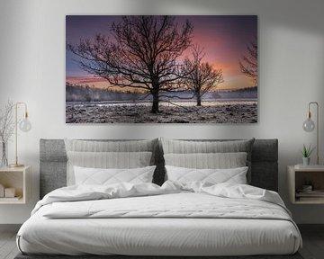 Schwarze Bäume mit Sonnenaufgang von Miranda Heemskerk