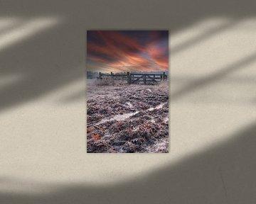 Koude ochtend met opkomende zon verticaal van Miranda Heemskerk