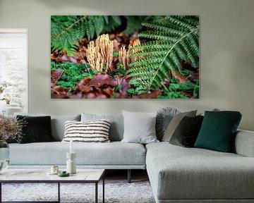 Koraalzwam in botanische tuin met varens