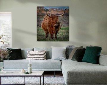 Schotse Hooglander in natuurgebied van Marjolein van Middelkoop