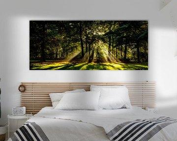 panorama opname van zonneharpen in een donker bos achter een boom van Margriet Hulsker