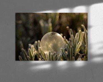Bevroren zeepbel van Tanja van Beuningen