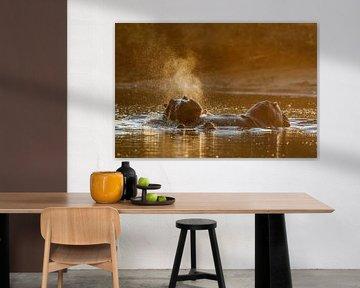 Nilpferde bei Sonnenuntergang von Henk Bogaard