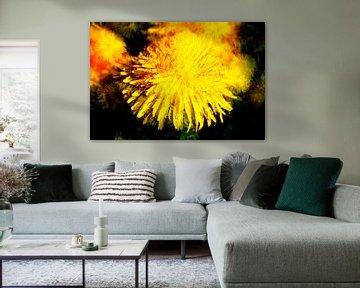 Löwenzahnblüte abstrakt , Makroaufnahme von Torsten Krüger