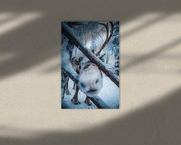 Rudolf het rendier van Prints by Abigail Van Kooten