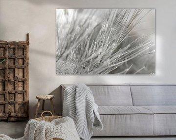 Besen in einer weißen Winterlandschaft von Sandra Koppenhöfer