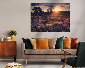 Coucher de soleil sur la bruyère violette sur Lieke Dekkers