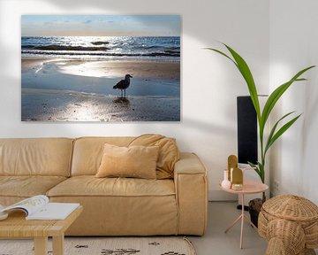 Vogel op het strand in Zandvoort, Nederland van Evelien Oerlemans