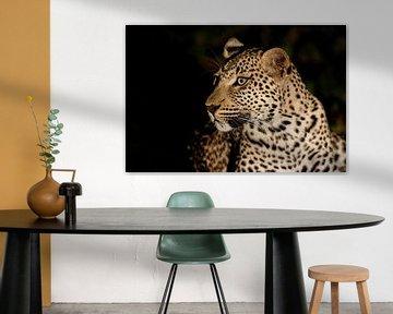 Portrait de léopard dans la nuit sur Henk Bogaard