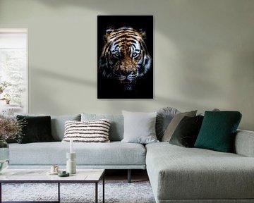 Tiger von shane mccoy