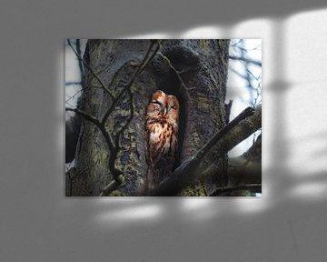 Waldkauz in seinem Loch von Erwin Kamp