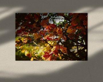 Blätter im Herbst von Klaus Feurich Photography