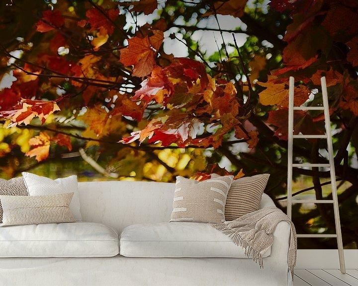 Beispiel fototapete: Blätter im Herbst von Klaus Feurich Photography