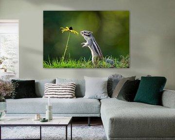 Eichhörnchen mit gelber Blume von Henk Bogaard