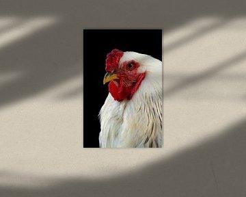 Huhn von Marianne Henstra