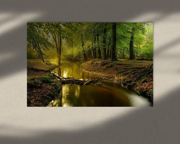 Sfeerimpressie: Leuvenumse Beek in het Leuvenumse bos op een vroege herfst ochtend van Sjoerd van der Wal