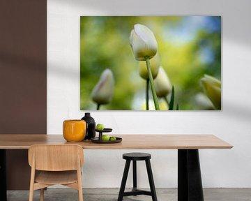 Die Tulpe - WEISS von Marly De Kok