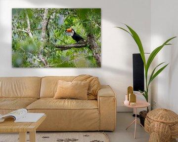 Tukan im tropischen Regenwald von Thijs van den Burg